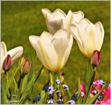 Flowers & Macro