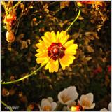 Garden Flowers & Greenery