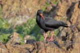 South_africa_2018__birds