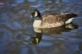winter_geese