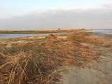 east beach at the lagoon IMG2241.JPG