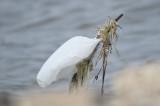 ibis BRD6140.JPG