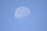moon BRD1343.JPG