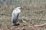 Leucistic & Hybrid Birds