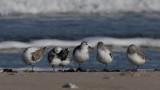 Migratory birds in Denmark