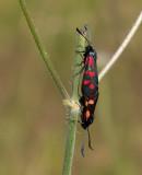 Butterflies II from Europe