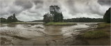 Slebech park at low tide.