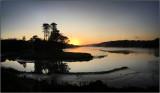 Slebech park at daybreak.