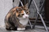 Cat of Moghegno