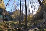 Rising sun on forest near Sonogno
