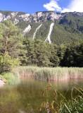Forêt de Finges