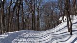 A walk on a snowy trail