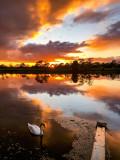 Same Swan, Different Sunset