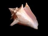 Shell_6164604_5HF™•
