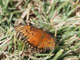 Butterfly 1312018
