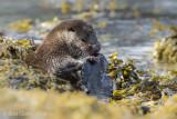Otter PSLR-4434