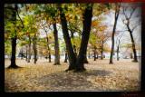 Pinewoods fall 2019