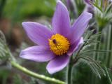 ***wild flower***