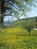 Schwarzenberg in spring