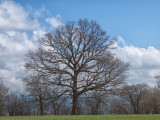 Tree beginning of spring