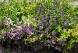***meadow / field-flora***