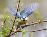 Birds in The Netherlands