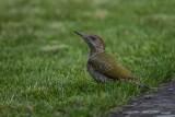Allgemeine Vogelarten
