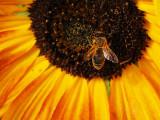 Bee U Ti Ful