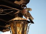 ¿Hablas inglés pequeño pájaro