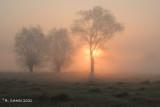 Keuzemeersen in de mist - Misty morning at the Keuzemeersen