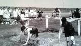 1958-1959 - JOHN POTTER,, 201, BUNTINGS CLASS, END OF CROSS COUNTRY..jpg