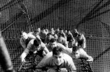 1956 - BOYS FROM RODNEY DIVISION, CLIMBING THE MAST, NO OTHER DETAILS AVAILABLE.jpg