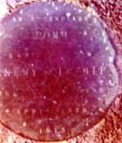 1972 - TONY ANGELL, PLAQUE ON PARADE GROUND REGARDING BOMB DROPPED DURING WW I.jpg