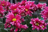 Lilies and Ladybugs 2021