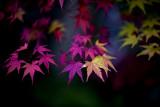 D4G_4051PortlandJapaneseTeaGarden1.jpg