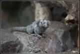 Pakawi Park (Olmense Zoo)