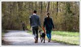 Walking the Dog ...