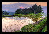 Sunrise at Jatiluwih Rice Terraces