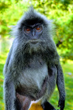 Primate Stare - by Mazidah Mustafa