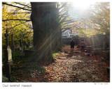 Old cemetery Hasselt / Oud kerkhof Hasselt