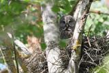 birds_of_prey_raptors_owls