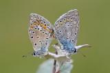 butterflies_moths_and_caterpillars