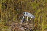 Wildlife in Germany