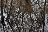 the web in the willows