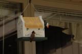 birdhouses_and_seasonal_interest