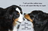 Floyd and Fiona my Bernese Mountain Dogs