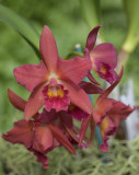 The vivid orchid