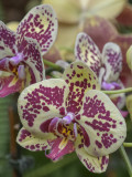 'Orchids: Amazing Adaptations'