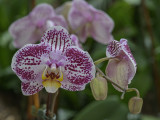 The last orchid