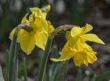 Spring, finally